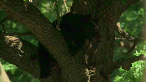 Residents surrounded barricades as the parks department had to assist in getting a bear out of a tree in Montclair, New Jersey.