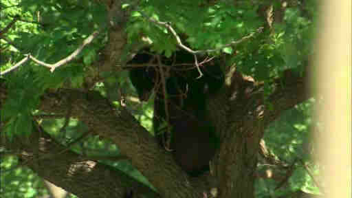 "<div class=""meta ""><span class=""caption-text "">Residents surrounded barricades as the parks department had to assist in getting a bear out of a tree in Montclair, New Jersey.</span></div>"