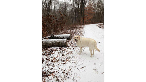"<div class=""meta ""><span class=""caption-text "">Petey enjoyed his snowy hike! (WABC Photo)</span></div>"