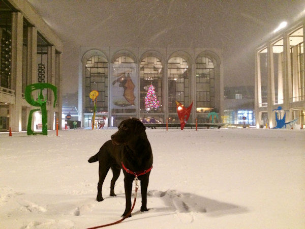 A dog in the snow in the City.
