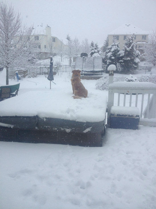 Molly standing guard in the snow in Rutherford, New Jersey