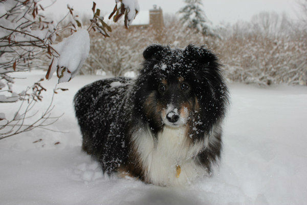 Buddy in snow