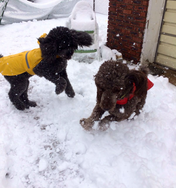 Moose and Max in the snow