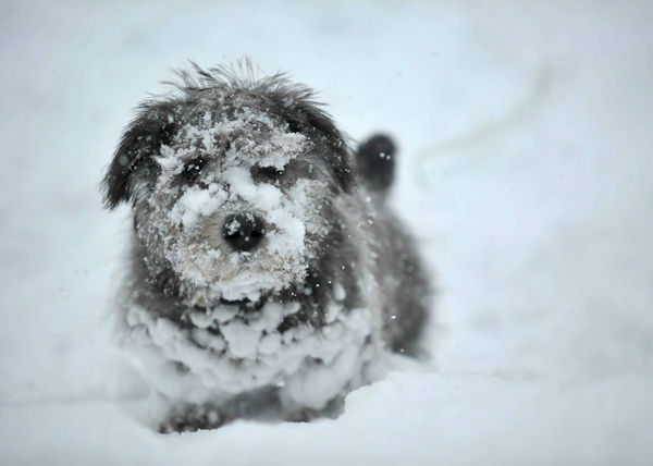 Teddy the terrier from nor'easter on February 13.