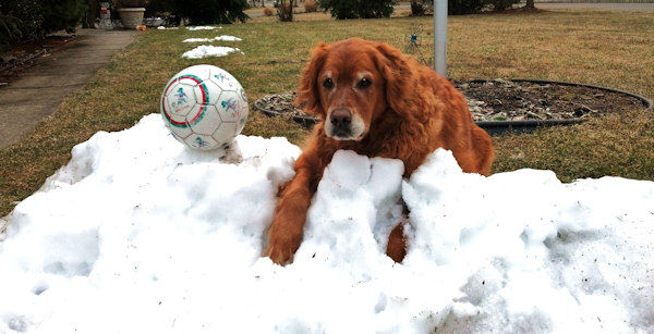 A few of our favorite photos sent to us from Eyewitness News viewers for Big Dog Sunday.