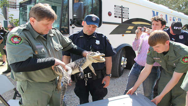 "<div class=""meta image-caption""><div class=""origin-logo origin-image ""><span></span></div><span class=""caption-text"">Anyone with an illegal reptile or amphibian had a chance to turn it in to the Suffolk County SPCA Saturday without being punished.</span></div>"