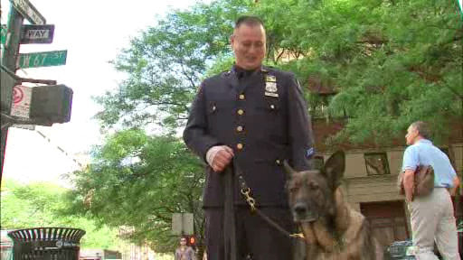 Bear, a member of the NYPD Transit Bureau's K-9 Unit, sustained four broken teeth and cuts to his tongue when he and his handler responded to the scene of a fight at the 59th Street Subway Station in Manhattan.  His handler, Officer Vincent Tieniber sustained a sprained wrist.