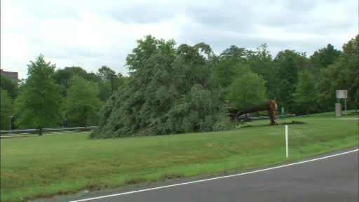 Storm damage in Branchburg, NJ