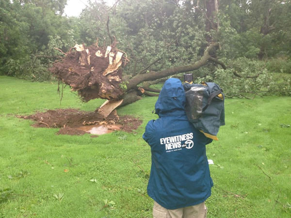 Trees down in Branchburg, New Jersey (Michelle Charlesworth)