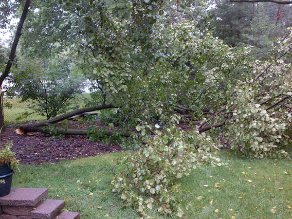 Tree branch down in Bridgewater NJ (Maria Semple)