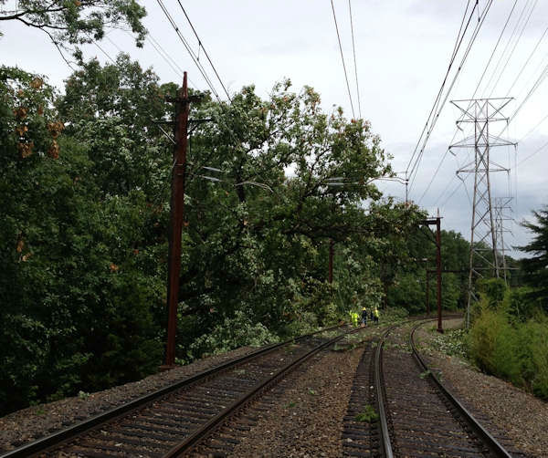 Tree on overhead lines along the New Jersey Transit line in Summit, NJ (NJTransit)