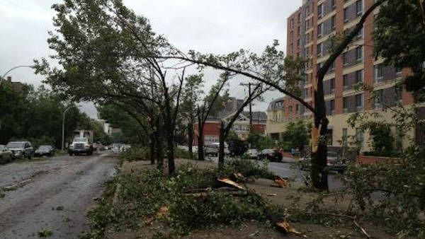 Trees down in Yonkers following a storm on Monday, July 1, 2013. (Joe Torres)