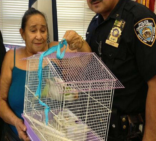 "<div class=""meta ""><span class=""caption-text "">Cuca, the pet parrot, was reunited with its owner and her son, who was wearing an angry bird shirt, at the 42nd Precinct in the Bronx.  The thief stole Cuca at gunpoint on Monday, July 29. (Photos from @NYPDNews via Twitter)</span></div>"