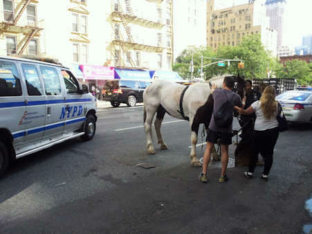 Carriage horse takes off, injures two tourists