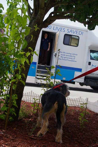 The North Shore Animal League rescued animals from Mississippi in preparation of Isaac, that is expected to hit some time Wednesday.