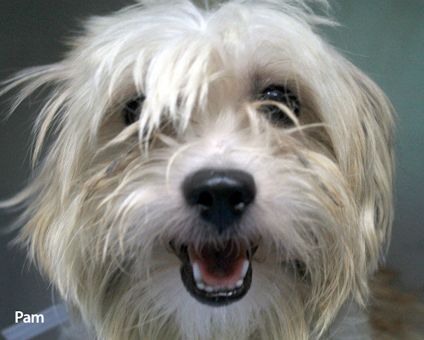 "<div class=""meta ""><span class=""caption-text "">68 small breed dogs including, Shih Tzu?s, Poodles, Maltese, Pomeranians, Pekingese, rescued from a fire on Staten Island are available for adoption.  They range in age from puppies to seniors. If you are interested in adopting one of the dogs please email adoption@nycacc.org for further information.  </span></div>"
