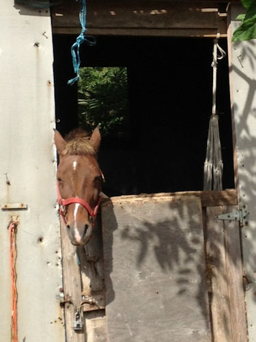 Photos from a condemned horse stable in the Bronx (Kemberly Richardson)