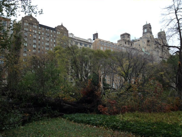 Trees down Roosevelt Park- Museum of Natural History