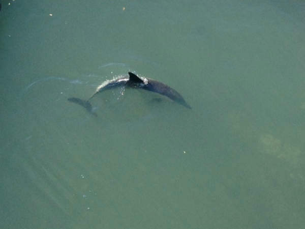 Photos of a dolphin stuck in a Coney Island creek.