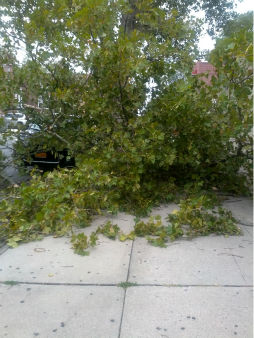 "<div class=""meta ""><span class=""caption-text "">A severe storm tore through the New York area Tuesday causing downed trees and power outages. (WABC Photo)</span></div>"