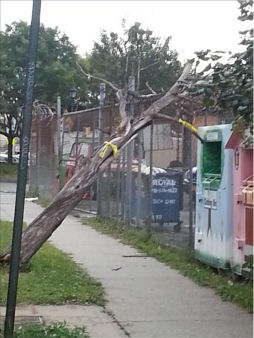 A severe storm tore through the New York area Tuesday causing downed trees and power outages. <span class=meta>(WABC Photo)</span>