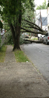 "<div class=""meta image-caption""><div class=""origin-logo origin-image ""><span></span></div><span class=""caption-text"">A severe storm tore through the New York area Tuesday causing downed trees and power outages. (WABC Photo)</span></div>"