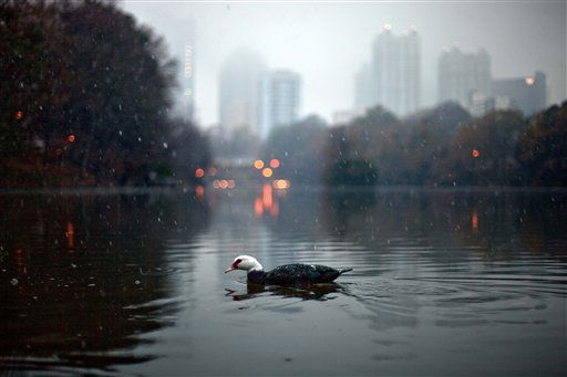 A duck swims in the lake of Piedmont Park as snow falls against the skyline of midtown Atlanta Saturday, Dec. 25, 2010. &#40;AP Photo&#47;David Goldman&#41; <span class=meta>(AP Photo&#47; David Goldman)</span>