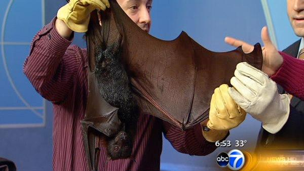 World's_Biggest_Bat http://abclocal.go.com/wls/story?id=7994796