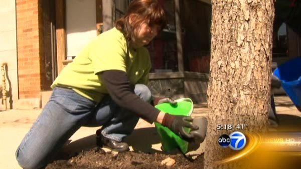Researchers test biochar on Chicago trees