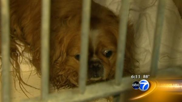 Thieves steal animal shelter's air conditioning