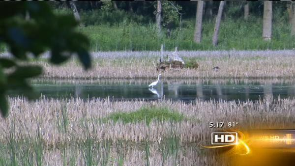 Hegewisch Marsh returning to former beauty