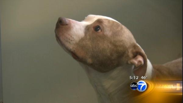 Lucky dogs get second chance at Trio Animal Foundation