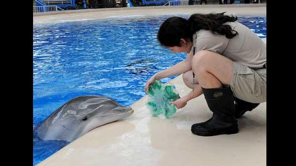 Melissa Zabojnik, a senior keeper for the Chicago Zoological Society, gives Noelani, an 8-year-old
