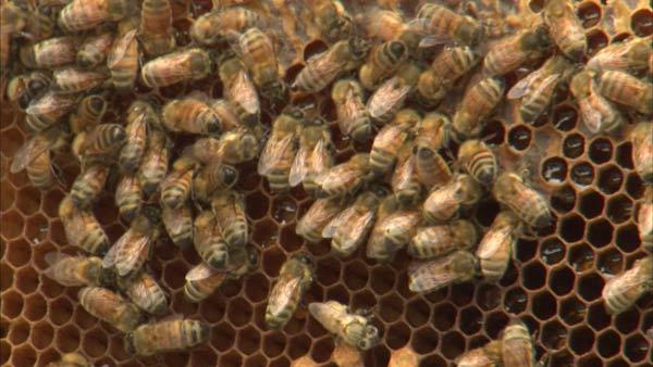 Local, sustainable honey wine creates a buzz
