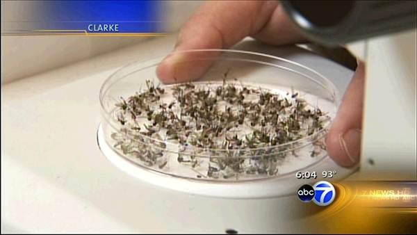 Evanston mosquitoes test positive for West Nile virus
