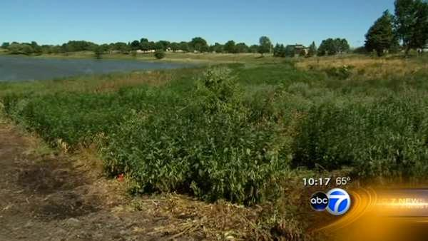 Drought increases firework dangers