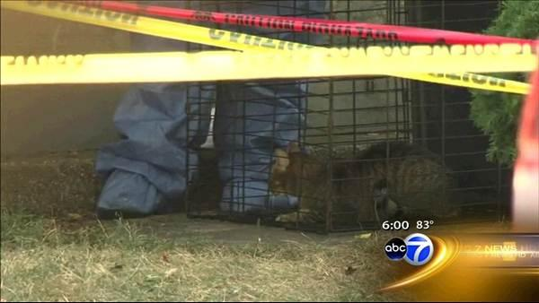Dozens of animals removed from Berwyn home