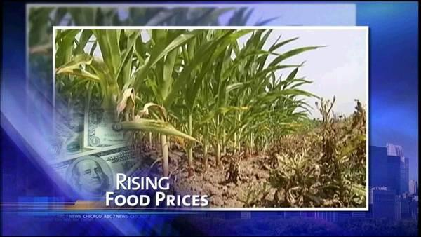 Heat impacts corn crop, drives up food prices