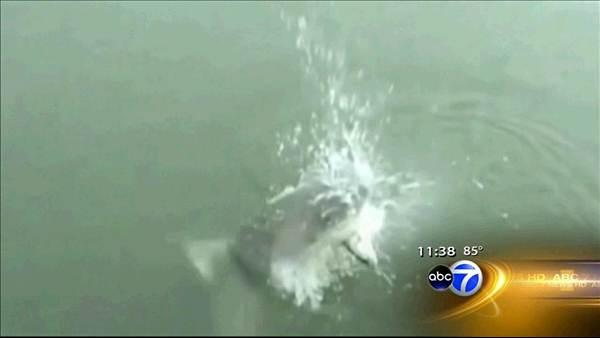 Shark steals fish from woman fishing in South Carolina
