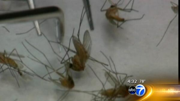 West Nile virus growing problem in Chicago, rest of state