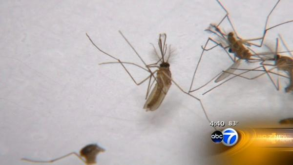 12 human West Nile cases reported in DuPage County