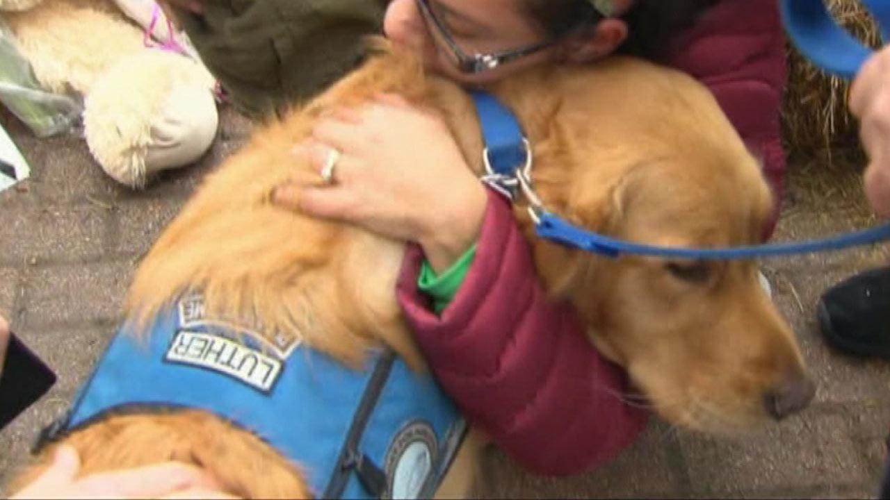 Comfort dogs provide emotional rescue for Newtown shooting survivors
