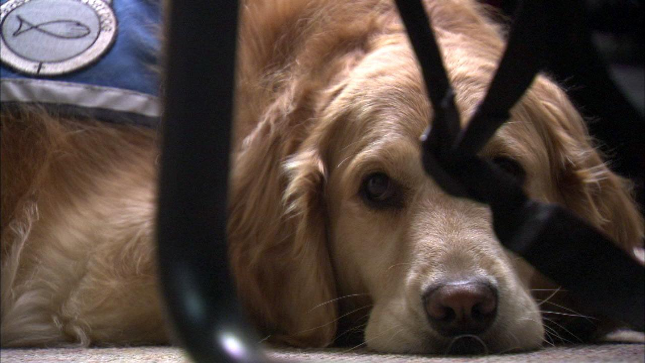 Comfort dogs return after helping for Newtown shooting survivors