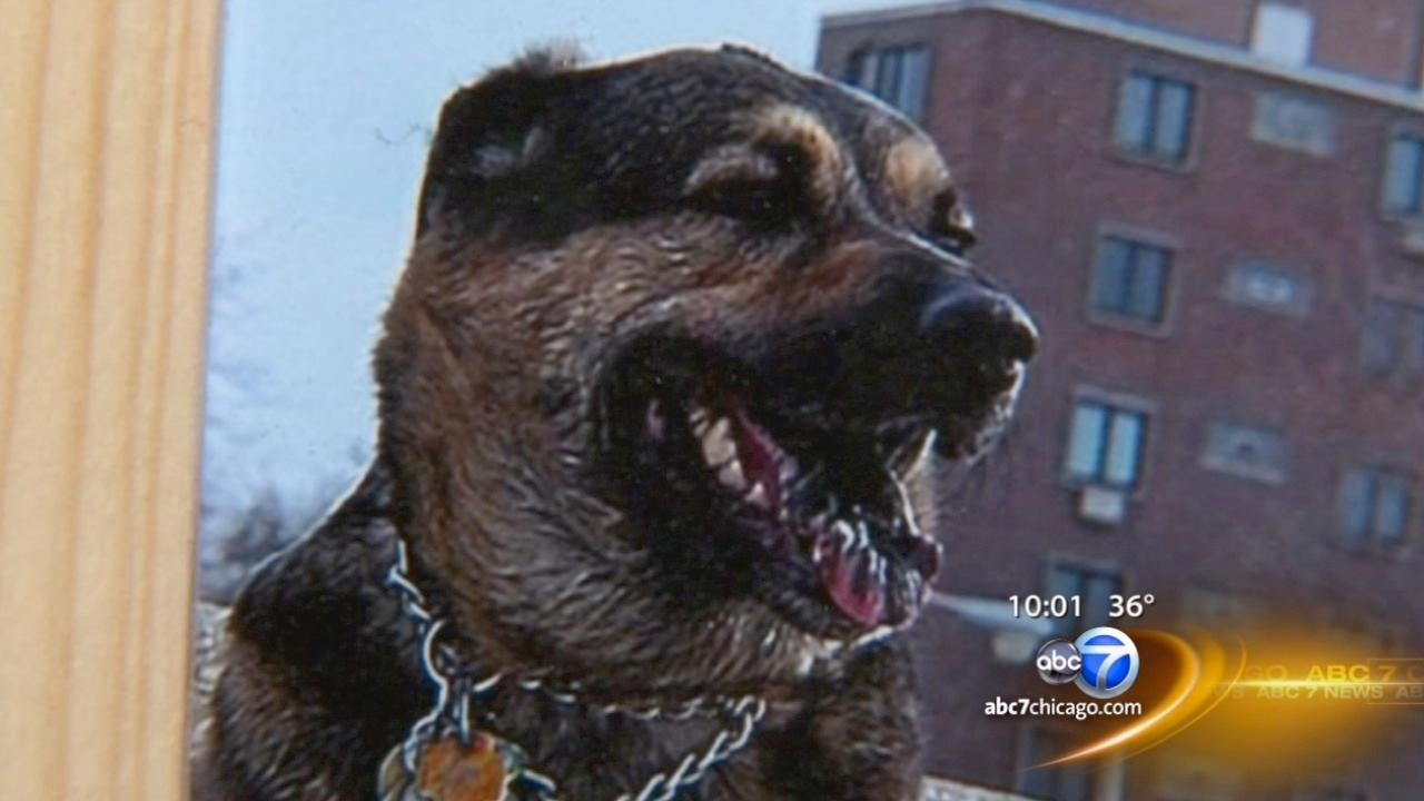 Man kills neighbor's dog, thought it was a coyote