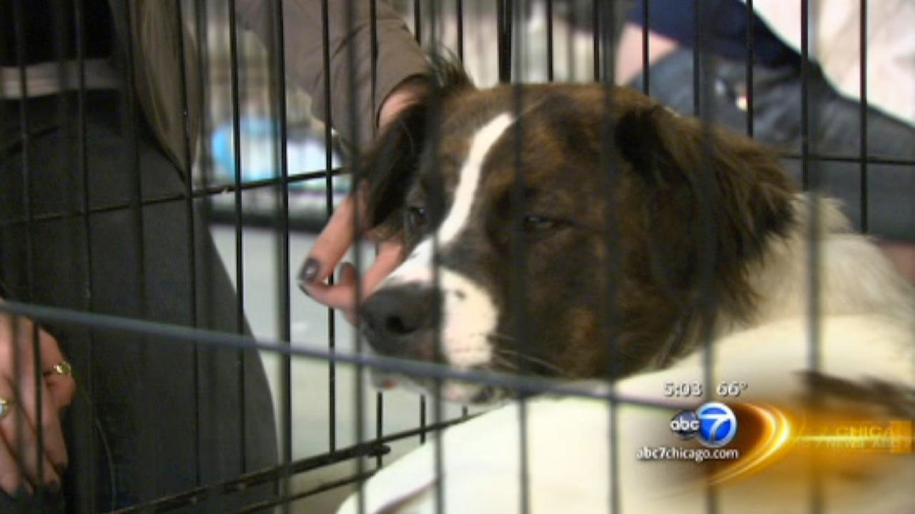 Orphaned pets rescued from Oklahoma City area arrive at PAWS Chicago for adoption