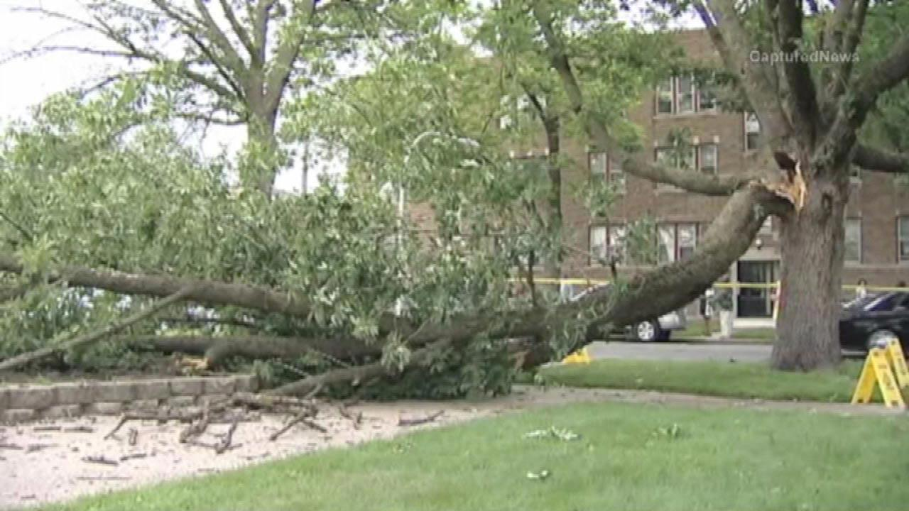 Seven people injured when tree limb fell onto them