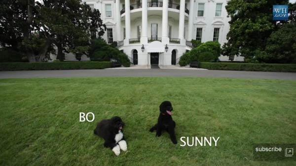 Obama new dog, obama puppy, sunny, obama sunny, obama dog