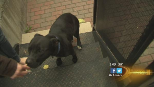Kennedy Expressway dog 'Hope' reunited with family