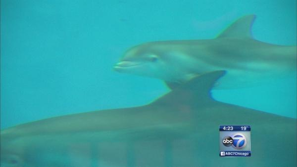 2 dolphins born at Brookfield Zoo
