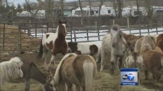 Volunteers help relocate animals
